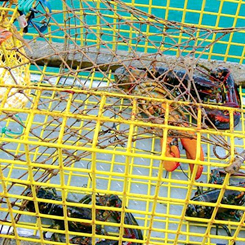 Trap Wire Aquaculture Trap Wally Wire Mesh